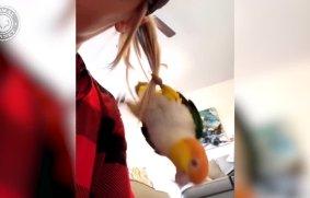 نمایش طوطی های خنده دار - مجموعه فیلم های جالب حیوانات