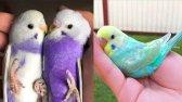 فیلم مجموعه لحظه های زیبا از حیوانات - طوطی های خنده دار 3