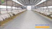 پروژه بزرگ ترین فارم پرورش گوسفند صنعتی