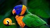 طوطی ماکائو زیبا در طبیعت - محافظ صفحه نمایش رنگی
