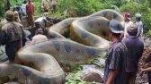 12 کشف عجیب در آمازون