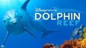 مستند صخره دلفین دوبله فارسی Dolphin Reef 2020