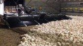 ماشین های اتوماتیک شگفت انگیز مزارع دامپروری