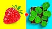 ترفندهای پرورش میوه های خوشمزه