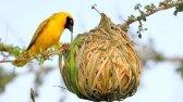 12 لانه شگفت انگیز پرندگان