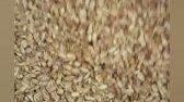 خط تولید کره بادام زمینی-دستگاه تفت دانه بادام زمینی-ماشین سازی روشن-09123389187