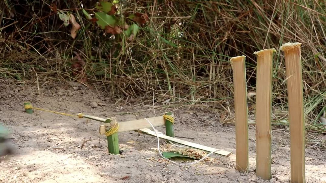ساخت بهترین تله طوطی