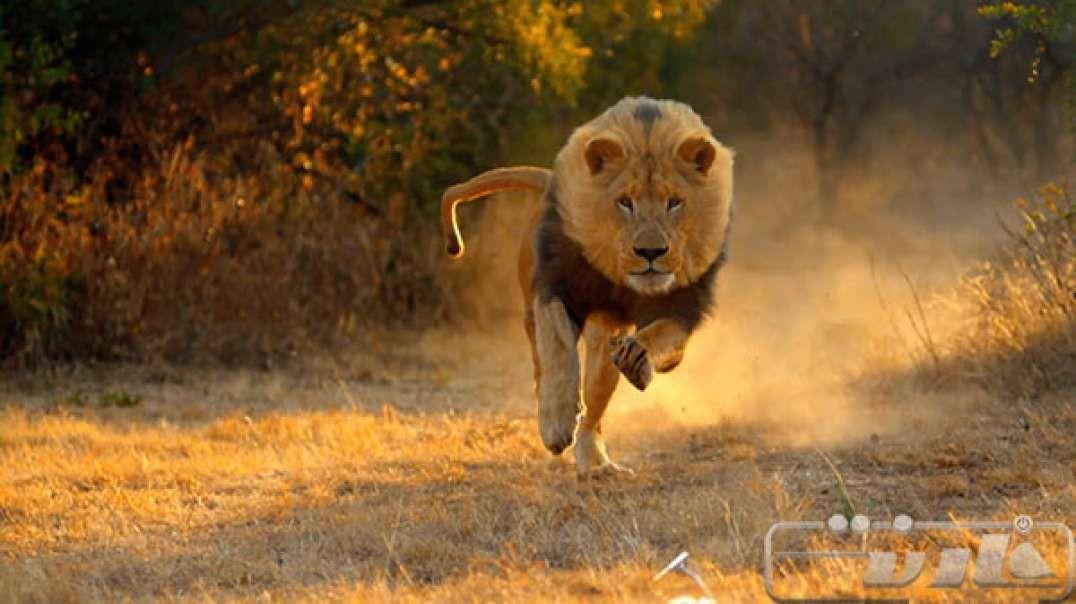 ده حرکت باورنکردنی از حیواناتی که حیوانات دیگر را نجات میدهند