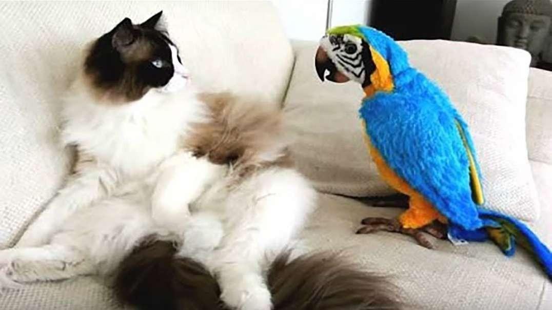 انجام کار خنده دار طوطی های با مزه 2018