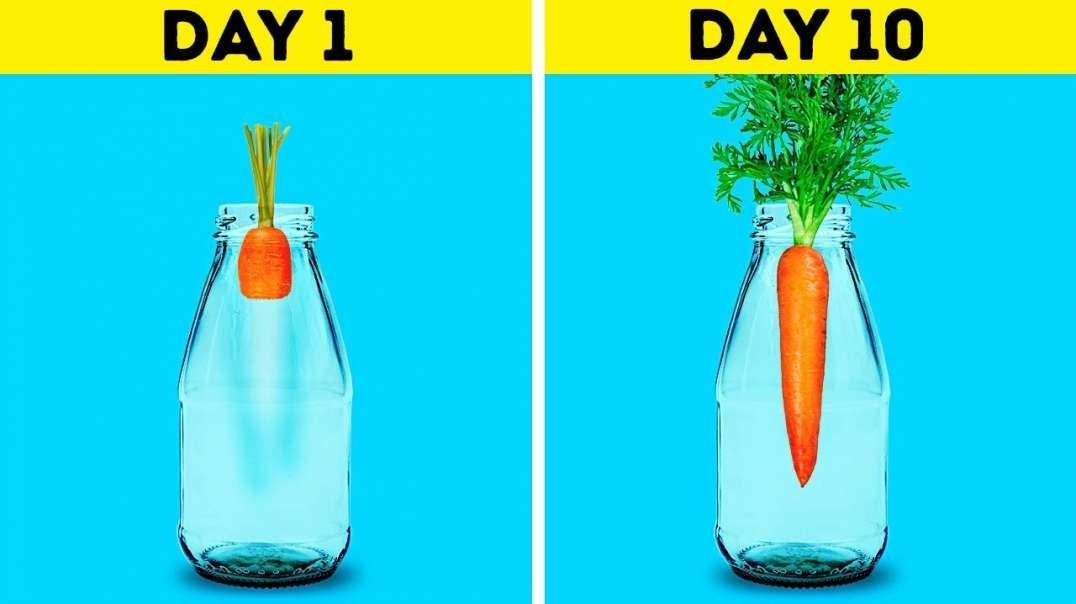 18 ترفند جذاب برای رشد گیاهان
