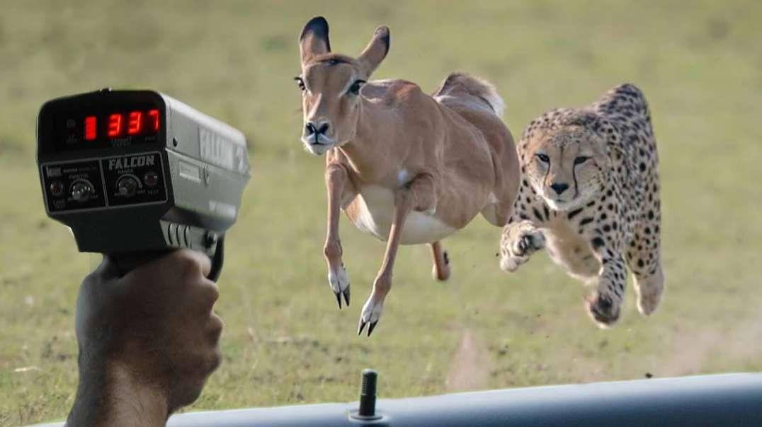 10 تا از سریع ترین حیوانات کره زمین